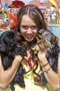 Teen pop star turned kinda adult, Miliey Cyrus loves her little dogs