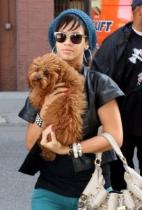 Rihanna's hairy little love is named Oliver