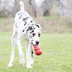 bored-dog-toys-1