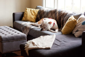 top 10 best dog blanket for the couch couch dog blankets rh dogpsycho com best dog blankets for sofa Cotton Throw Blankets for Sofa