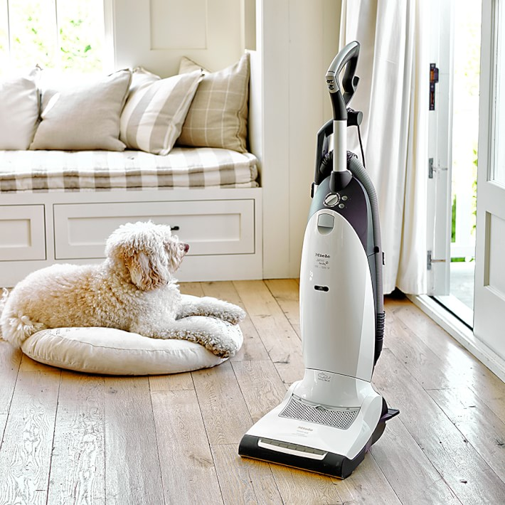 How To Get Dog Hair Out Of Carpets And Other Cleaning