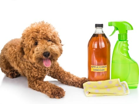 Natural Flea Treatment For Dogs Dogpsycho Mental For Mutts